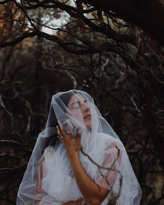 Just a little hello as I realized I haven't posted anything in a while. If you need a social media guru, I'm not your girl. 😁🦄 Throwback to doing a little photo shoot out in Redding to promote the EP release. This was one of my favorites bc it's weird and those branches look dope.  Fun fact: a bee got stuck under that veil with me 🐝😳 thank the good lord @dallaswigston was there to save the day. Also, he took these photos and he's super talented. Go check him out if you know what I mean 😏. #music #localartist #nashville #photoshoot #reddingcalifornia #summerlove #notaweddingshoot