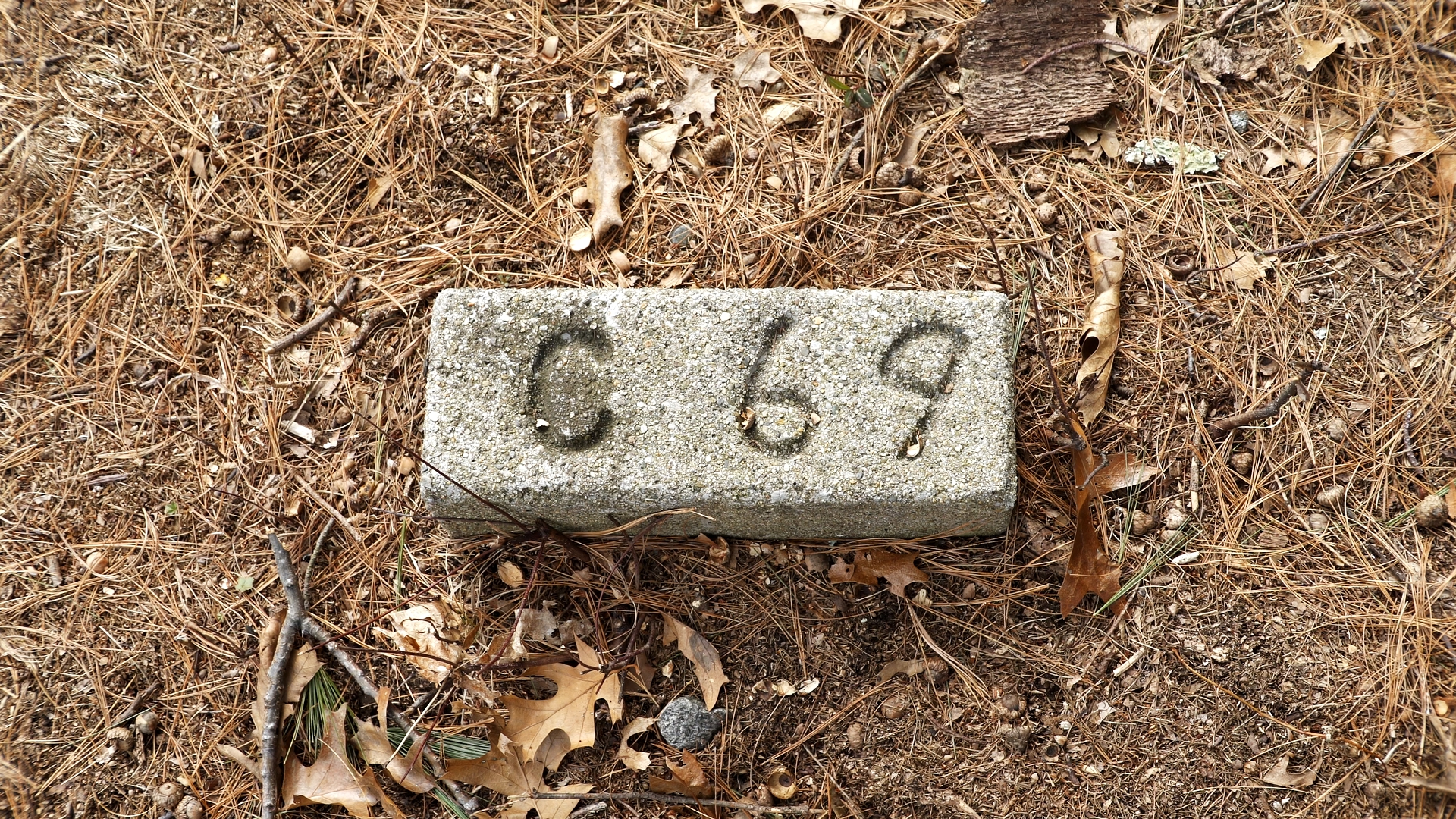 The Fate of Human Beings - The Fate of Human Beings uncovers the stories of 310 unidentified people buried in the Metfern Cemetery, interrogating the collective memory of mental institutions held by the surrounding city of Waltham.