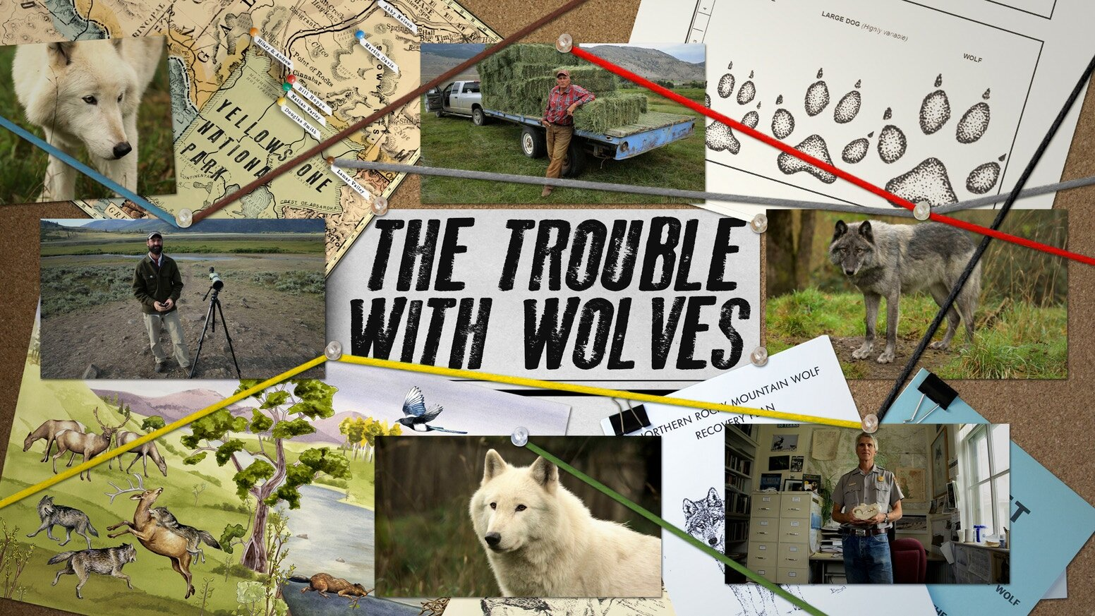 The Trouble With Wolves - Death threats, court battles, and an iconic endangered species in middle, THE TROUBLE WITH WOLVES takes an up-close look at the most heated and emotional wildlife conservation debate of our time. There's a reason wolves have been, and continue to be, the world's most controversial predator, but in these advanced times, can we not find a way coexist?