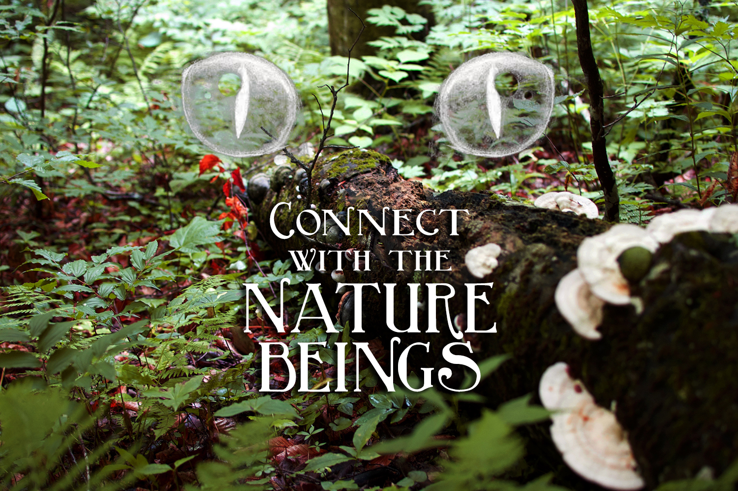 connect-nature-beings