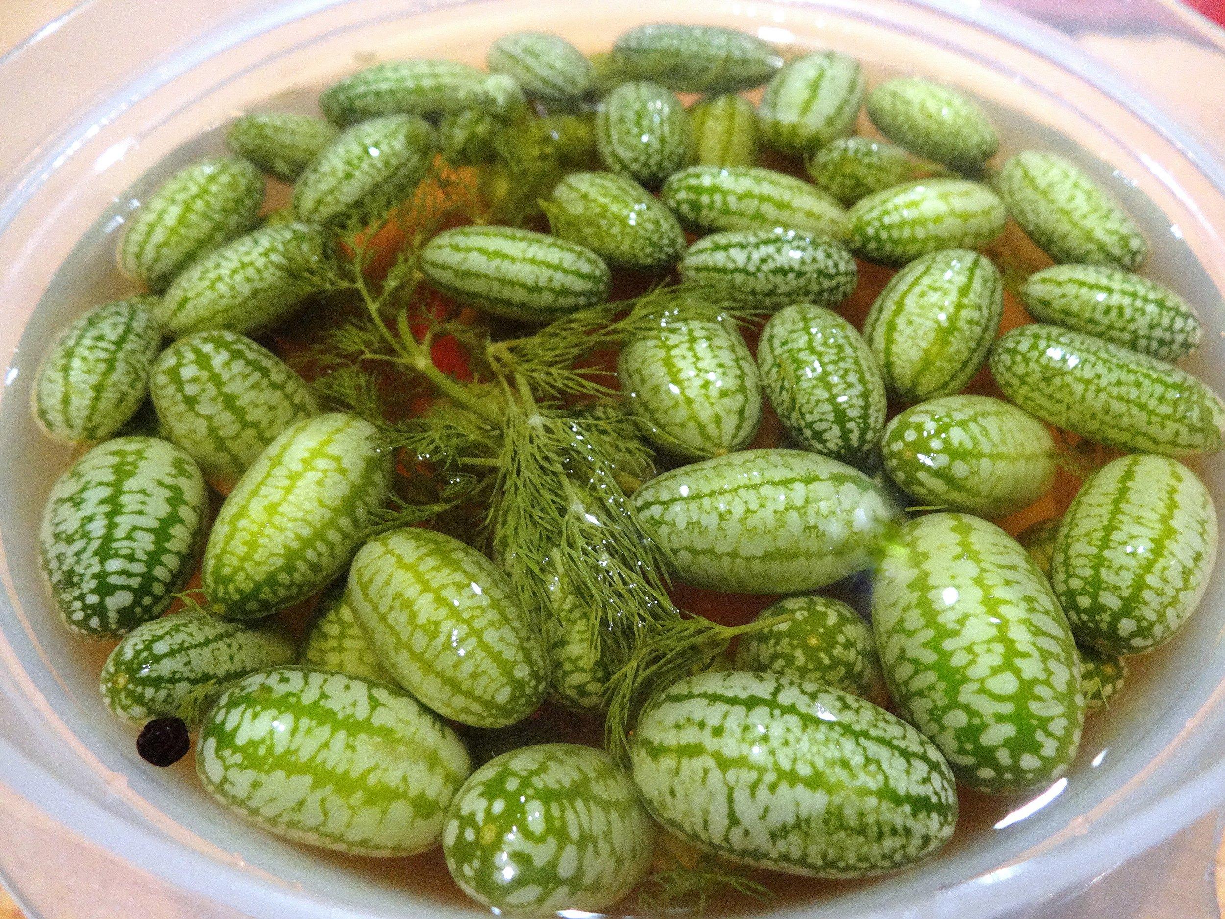 Pickled Baby Cucumbers 7242.jpg