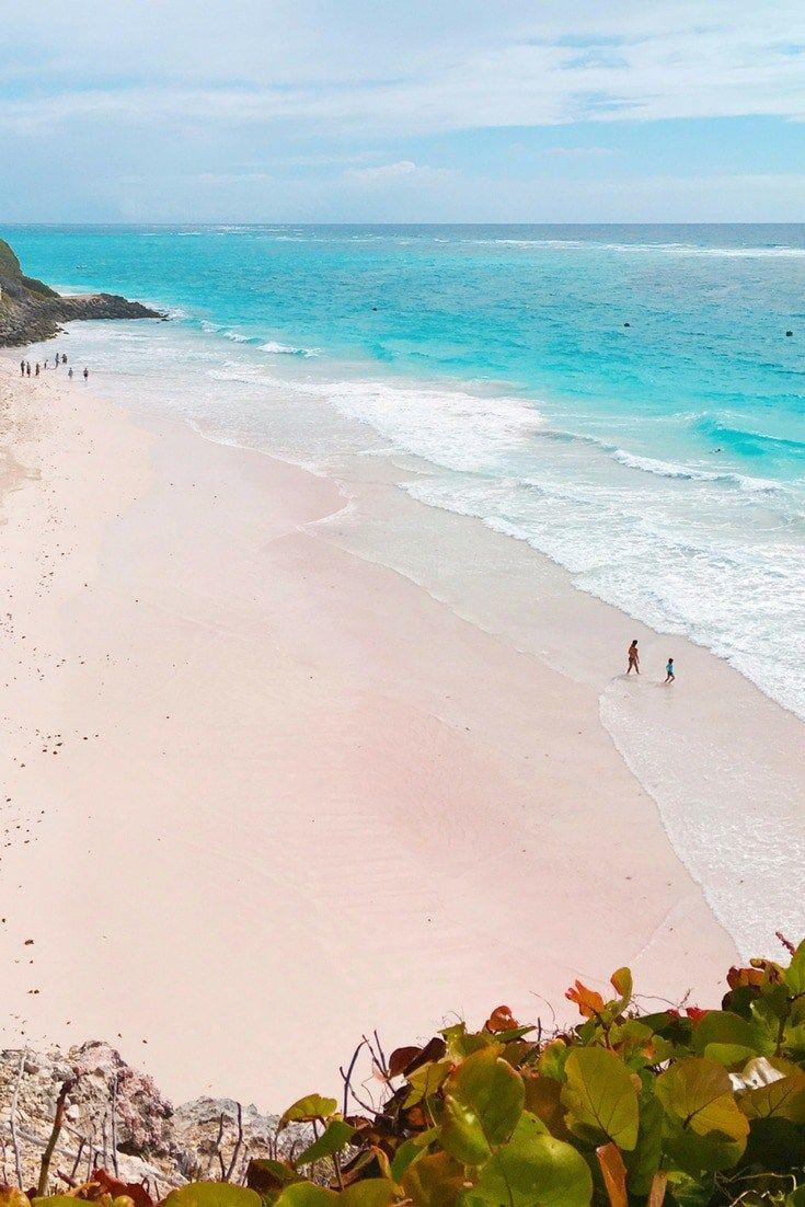 Pink Sand Beach Tour Jungle S Edge