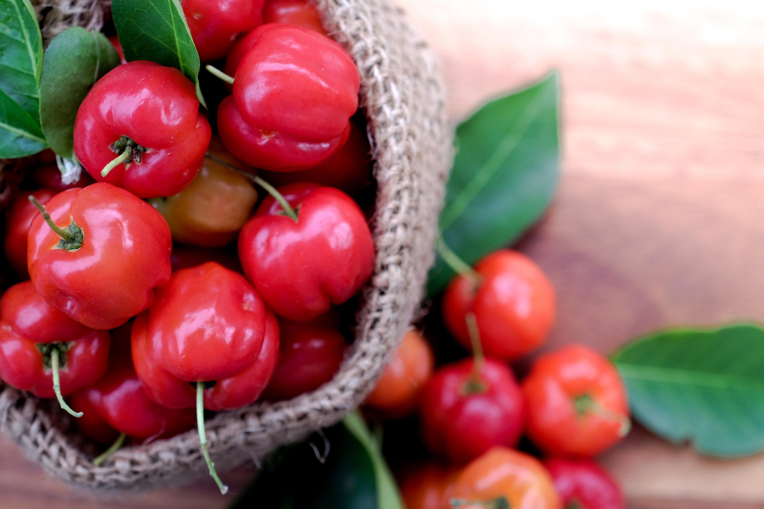 Fruit + Berry Extracts - Apple fiber, Apple Pectin, Acerola fruit, Papaya fruit, Bilberry fruit