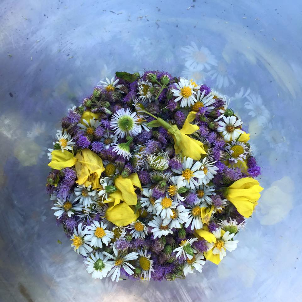 edible flowers.jpg
