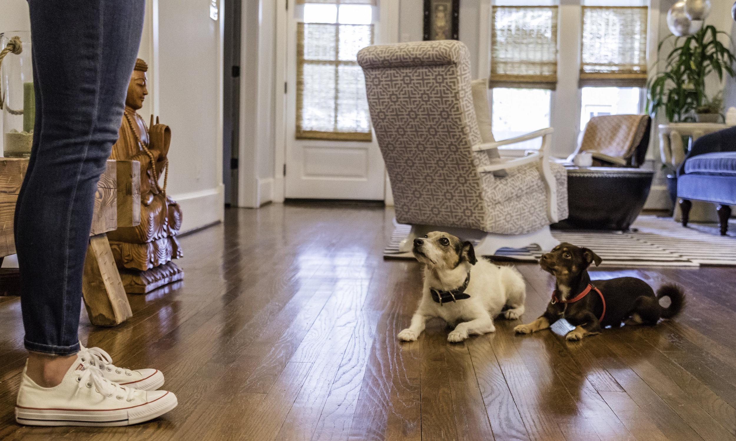 Stephanie Bennett Dog Puppy Training | Behavior Modification Potty Training | Houston TX_FC_7568 resized.jpg