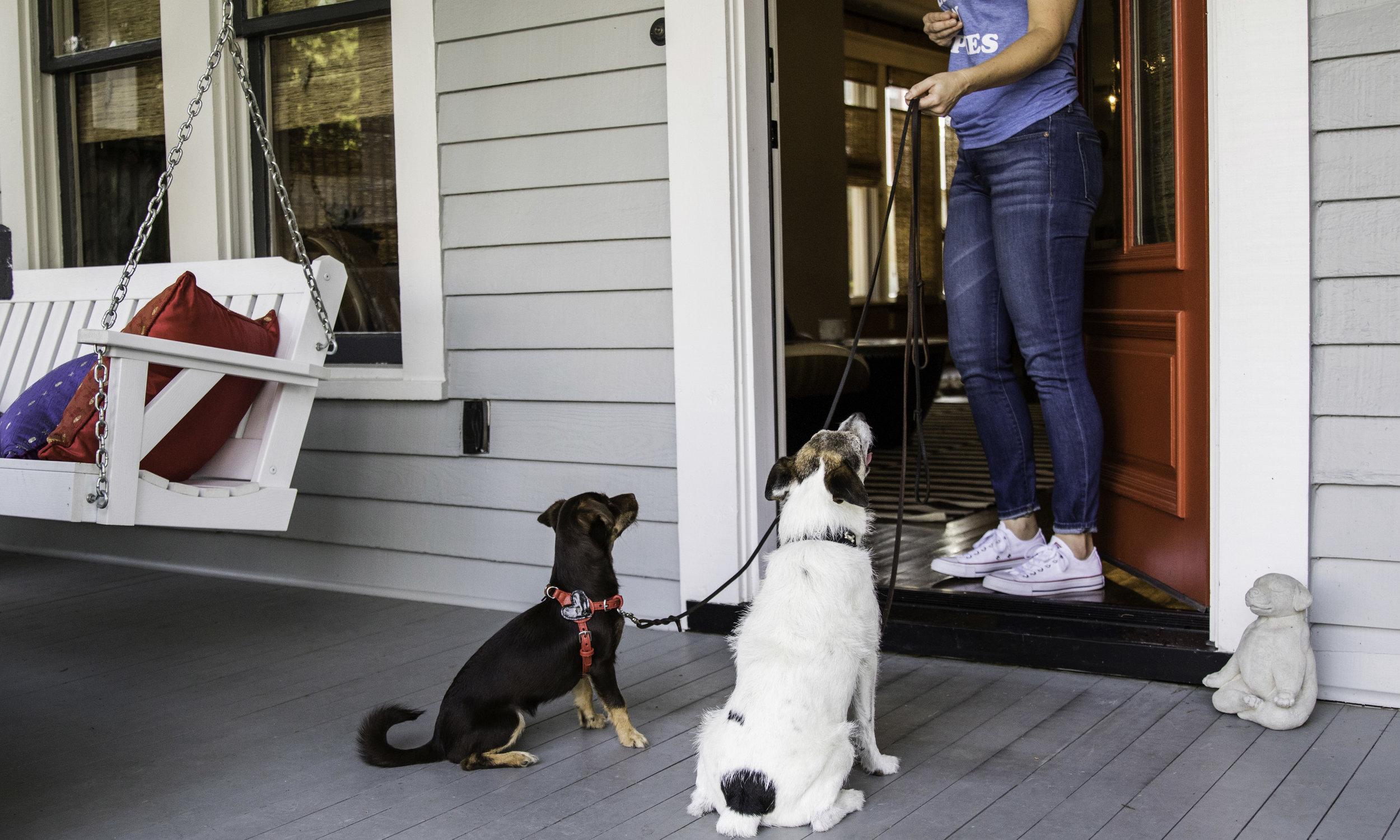Stephanie Bennett Dog Puppy Training | Behavior Modification Potty Training | Houston TX_FC_7577 resized.jpg