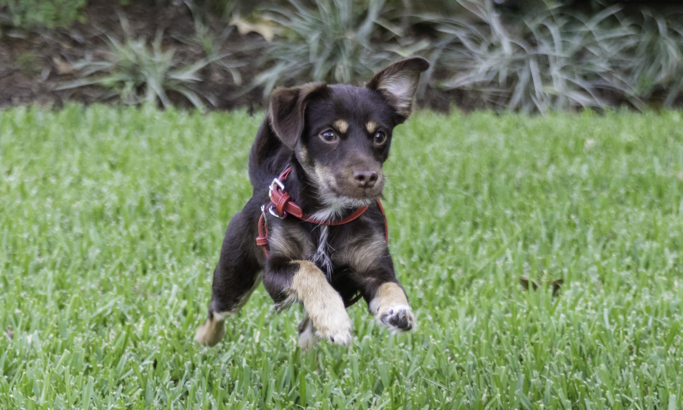 Stephanie Bennett Dog Puppy Training | Behavior Modification Potty Training | Houston TX_FC_7603 resized.jpg