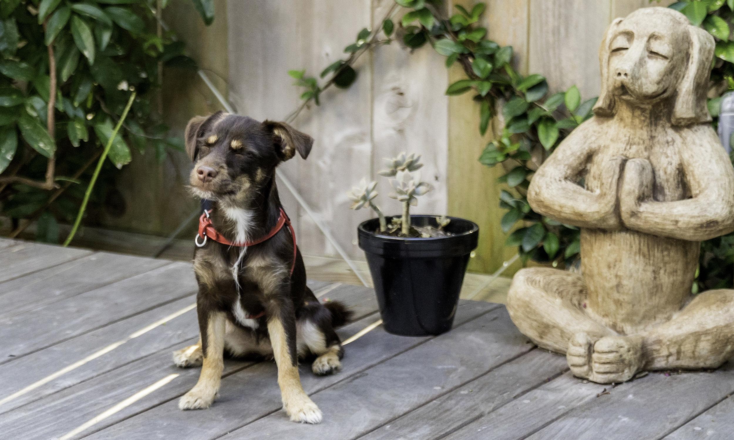 Stephanie Bennett Dog Puppy Training | Behavior Modification Potty Training | Houston TX_FC_7619 resized.jpg