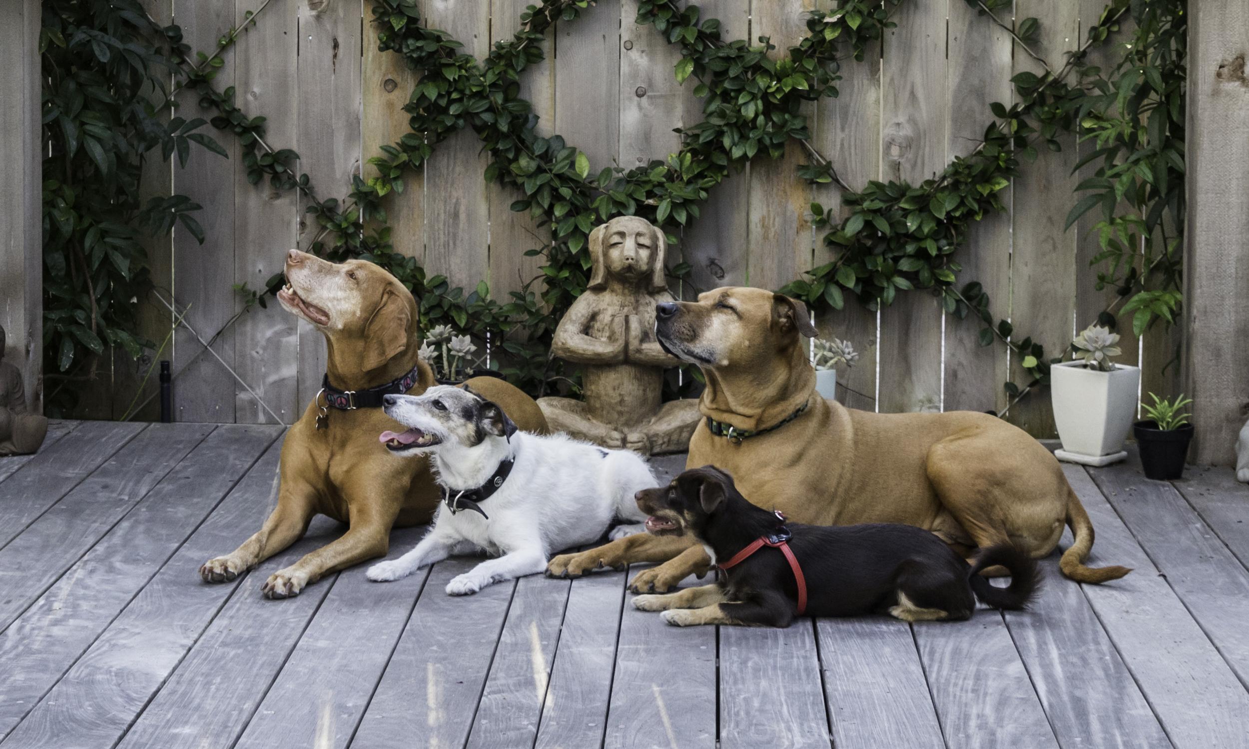 Stephanie Bennett Dog Puppy Training | Behavior Modification Potty Training | Houston TX_FC_7729 copy resized.jpg