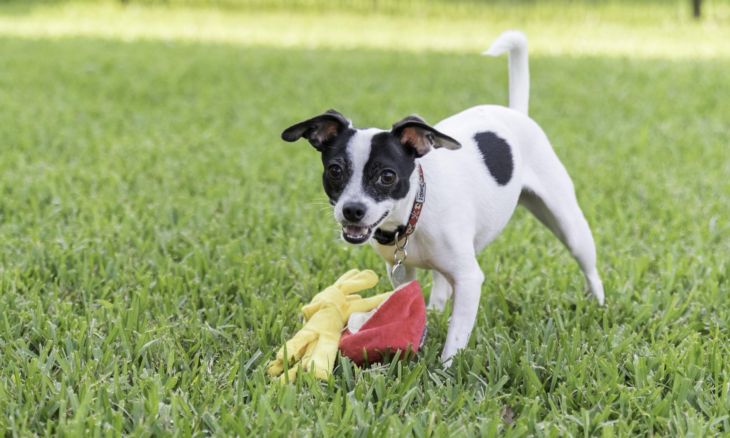Stephanie Bennett Dog Puppy Training | Behavior Modification Potty Training | Houston TX_FC_7903 resized (1).jpg