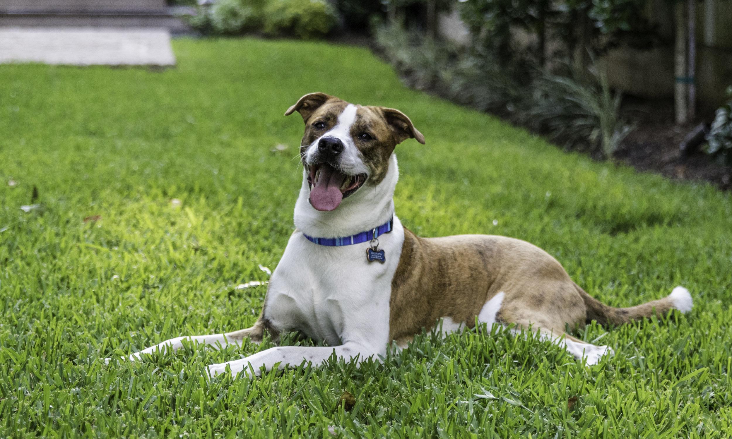Stephanie Bennett Dog Puppy Training | Behavior Modification Potty Training | Houston TX_FC_8254 resized.jpg
