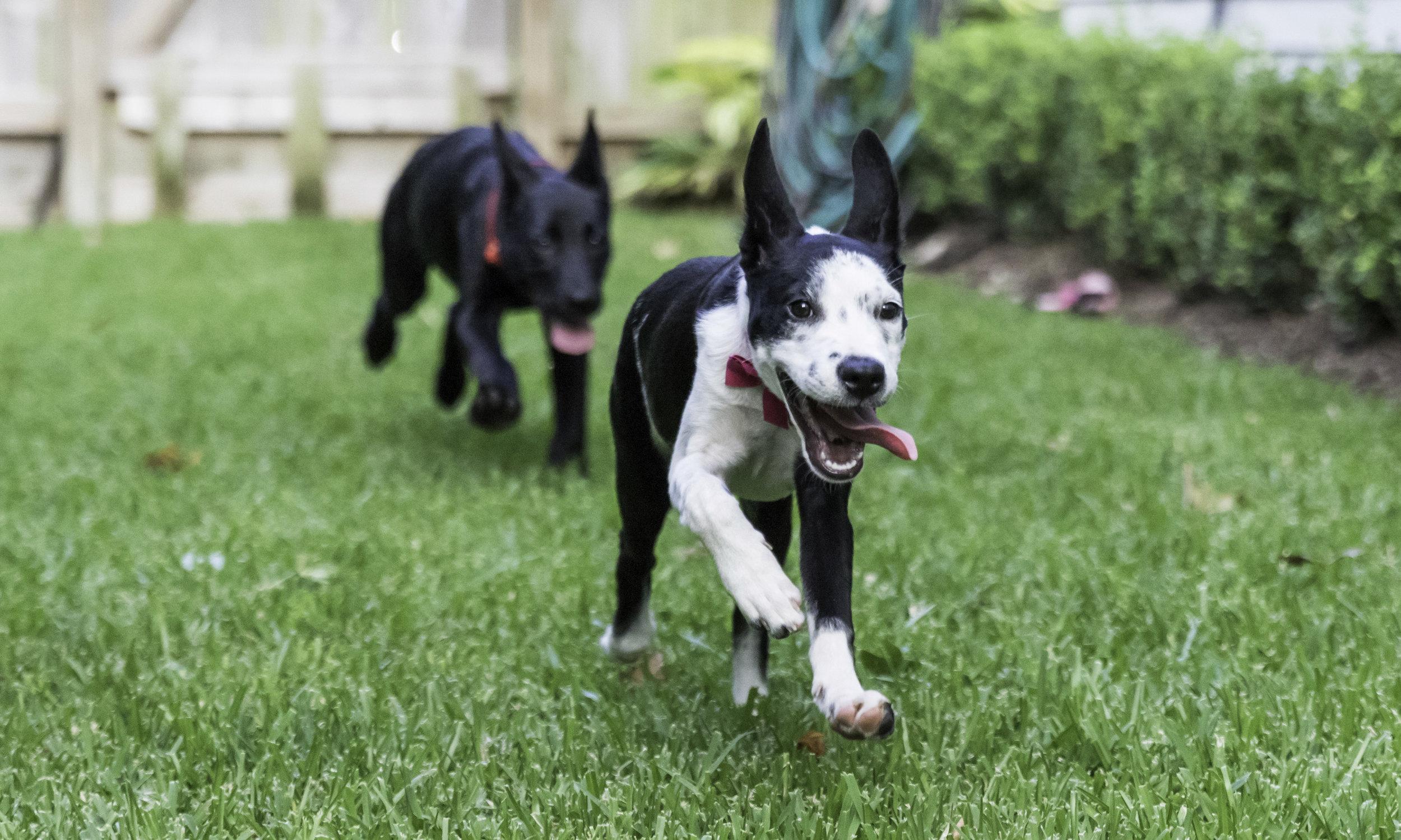 Stephanie Bennett Dog Puppy Training | Behavior Modification Potty Training | Houston TX_FC_8459 resized (1).jpg