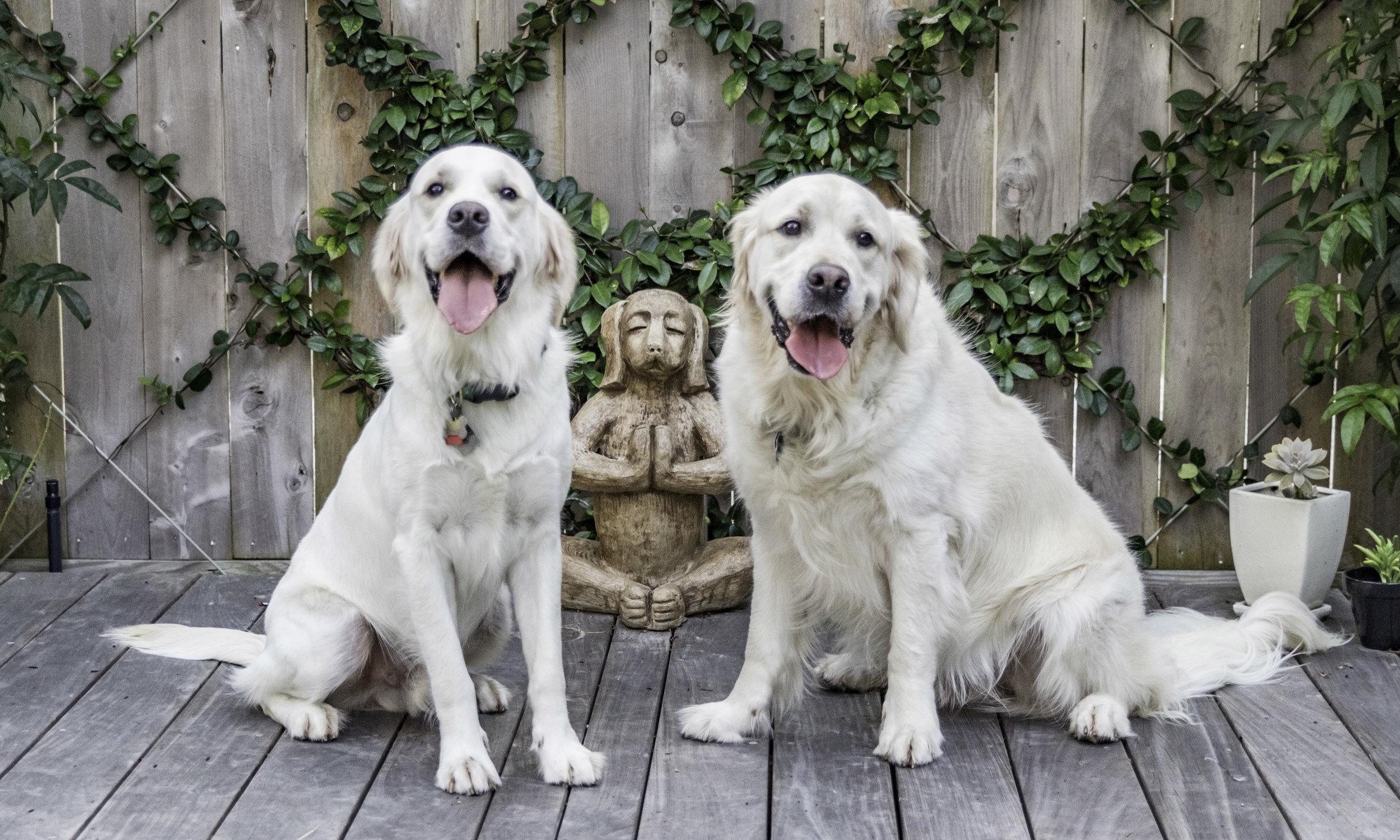 Stephanie Bennett Dog Puppy Training | Behavior Modification Potty Training | Houston TX_FC_8968 resized.jpg