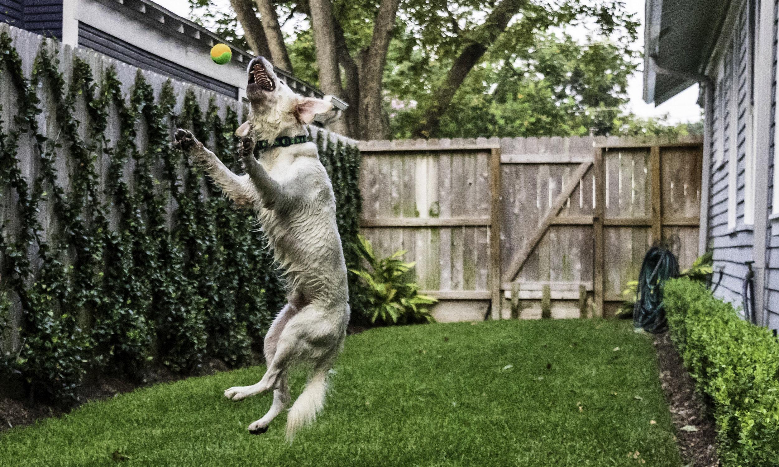 Stephanie Bennett Dog Puppy Training | Behavior Modification Potty Training | Houston TX_FC_9290 resized.jpg
