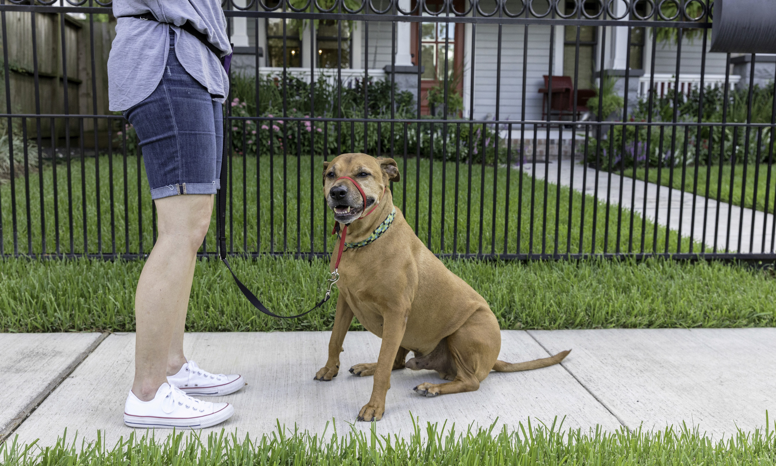 Stephanie Bennett Dog Puppy Training | Behavior Modification Potty Training | Houston TX_I4A9472 resized.jpg