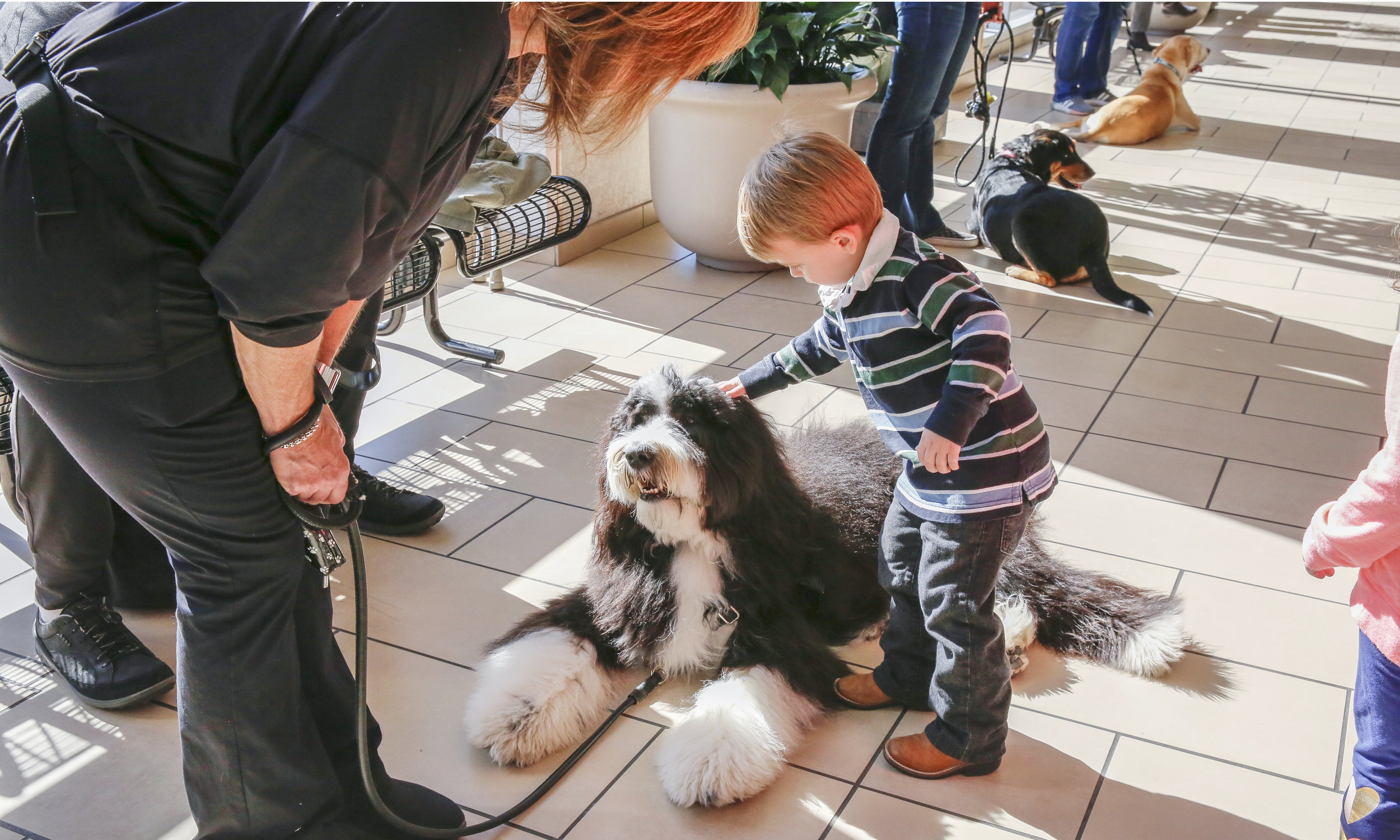 Therapy Dogs - Providing training, prep, and education for dog and handler teams that may be good candidates for therapy dog work.