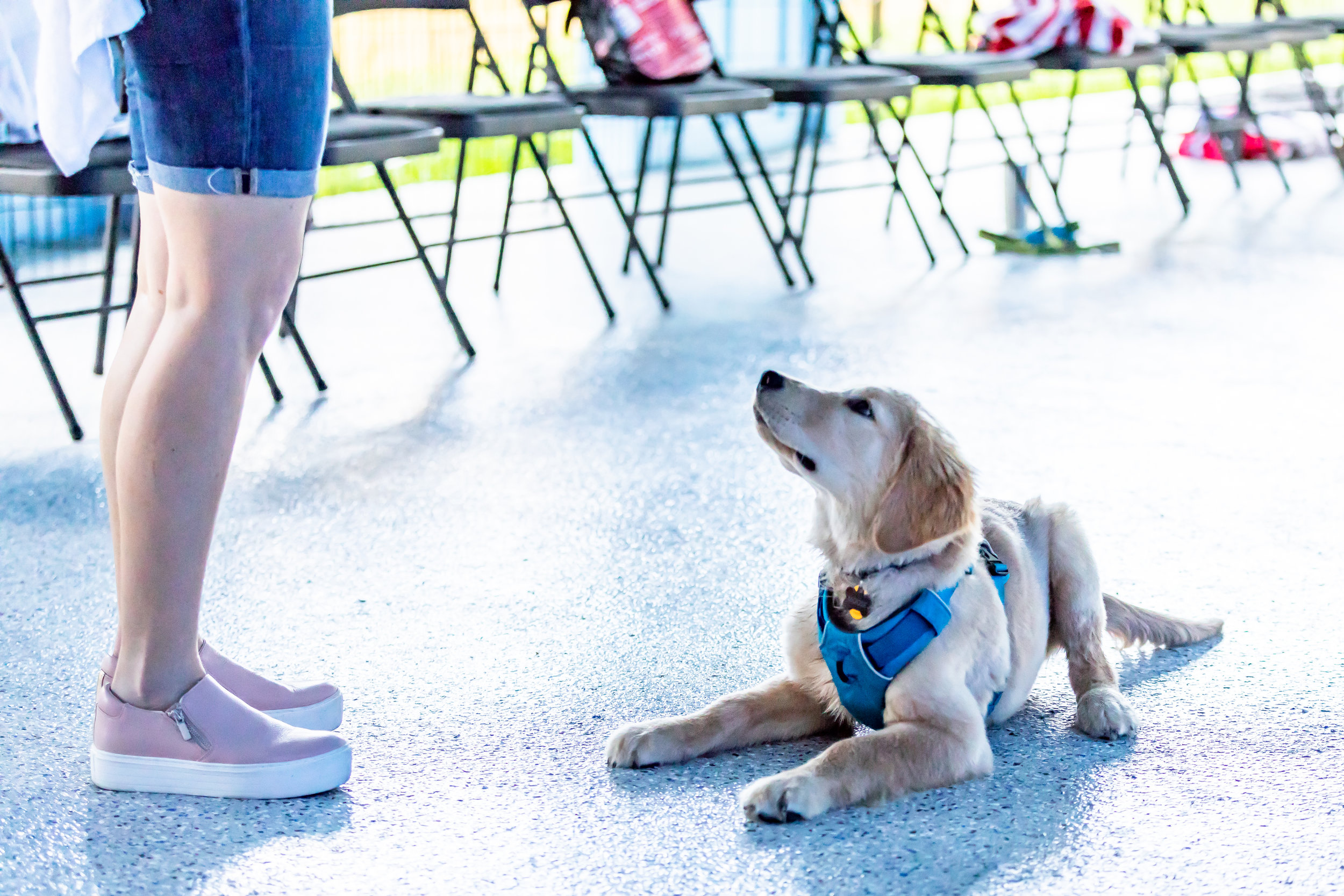 Rock Solid Stay - Can your dog keep a down-stay while you play Musical Chairs?Must have completed at least one of the following classes or packages:Puppy Class Part 1, Basic Manners, Puppy Day School Package of 10 or 20, or Private Lesson Package of 3Details:•Skills Clinics are $70 each and 90 minutes long• Proof of Rabies, DHLLPP/DA2P, and Bordetella are required.Upcoming Dates:October 4th @ 6:30pm