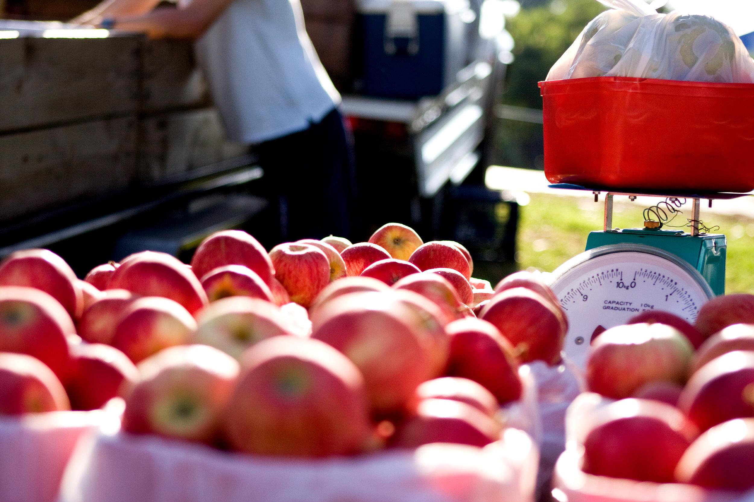 Faremers_Market_apples (1).jpg