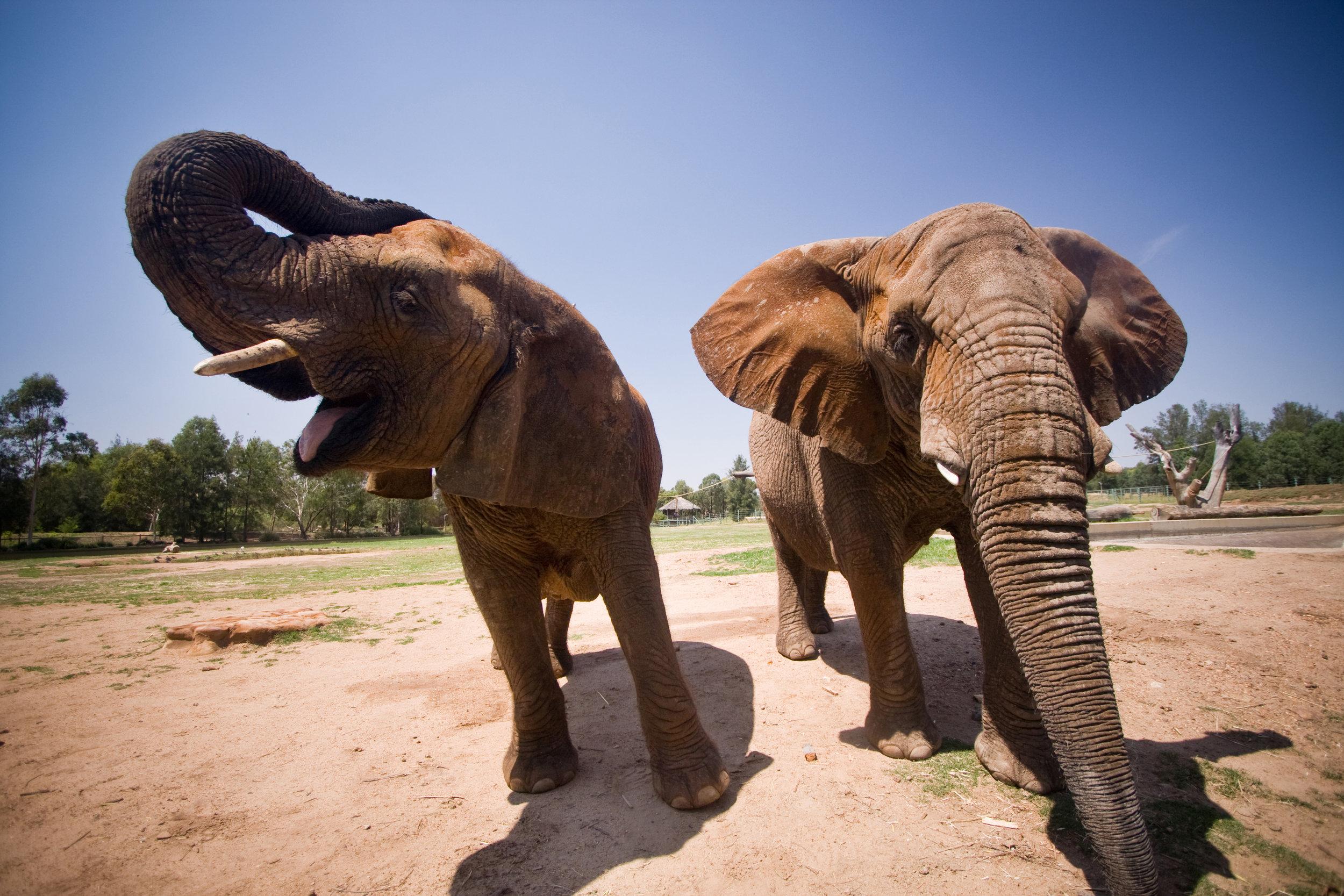 TWPZ_elephants (1).jpg