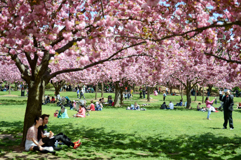 The Brooklyn Botanic Garden offers free admission on Tuesday and for two hours on Saturday, photo via  NYC Parks