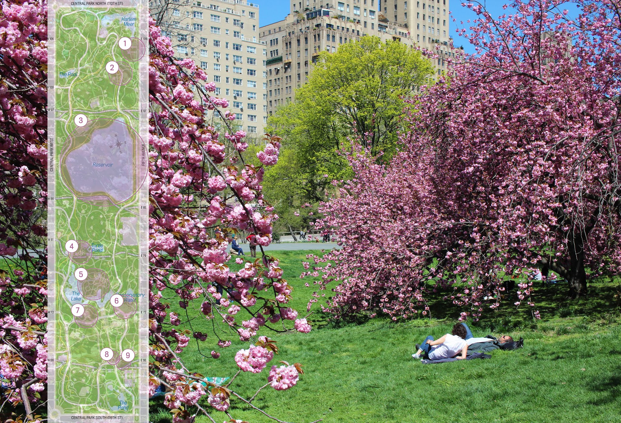 Central-Park-blooms-map.jpg