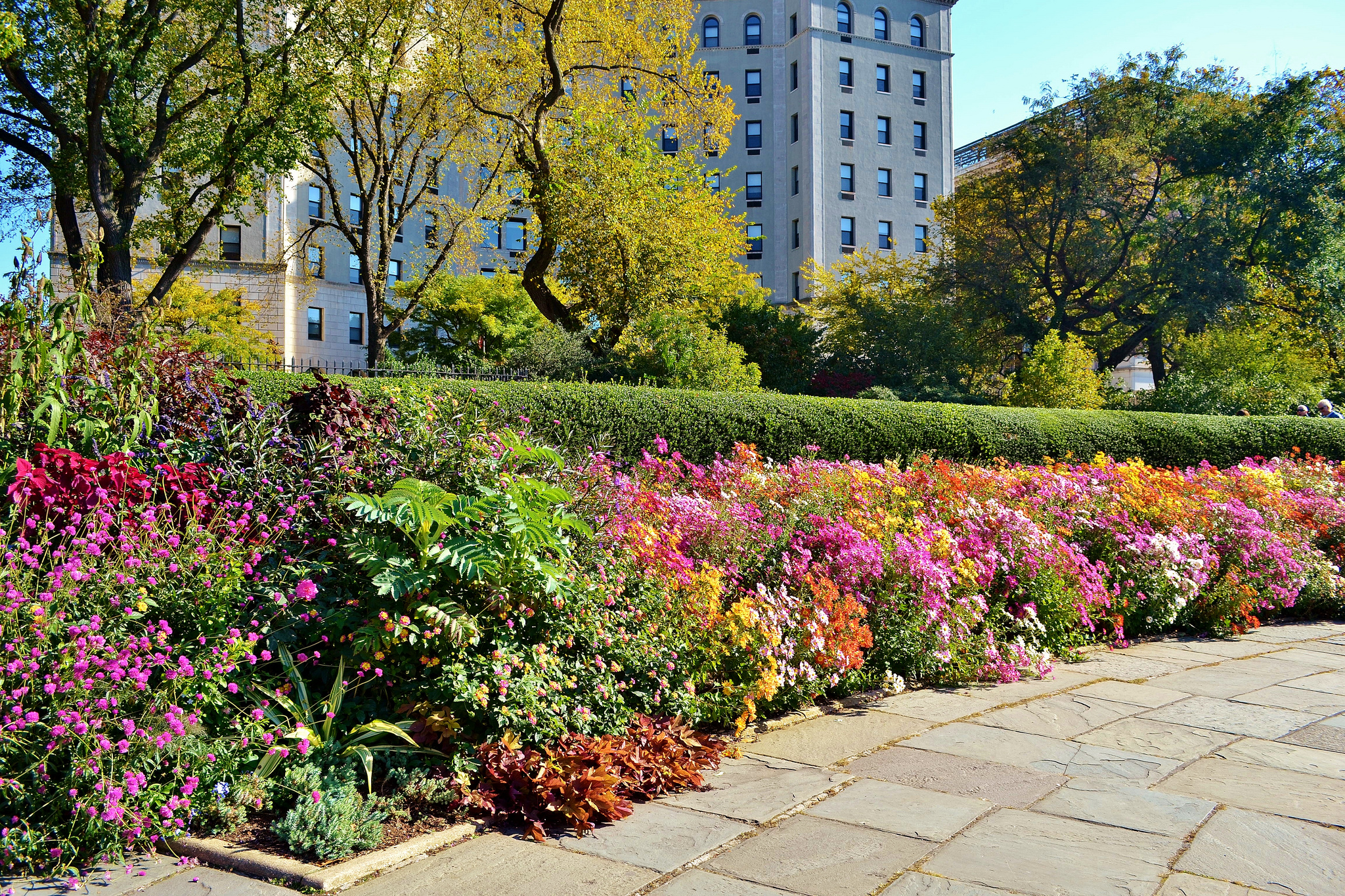 more-central-park-flowers.jpg
