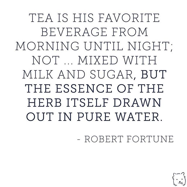 Sugar? No thanks. I'm sweet enough. A little note from Robert Fortune - the great tea thief of the 19th century. . . . #tea #teaquote #casstea #chinesetea #gongfucha #cha #sippingtea #tealife #tealife☕️ #quotesaboutlife #quotelife #robertfortune