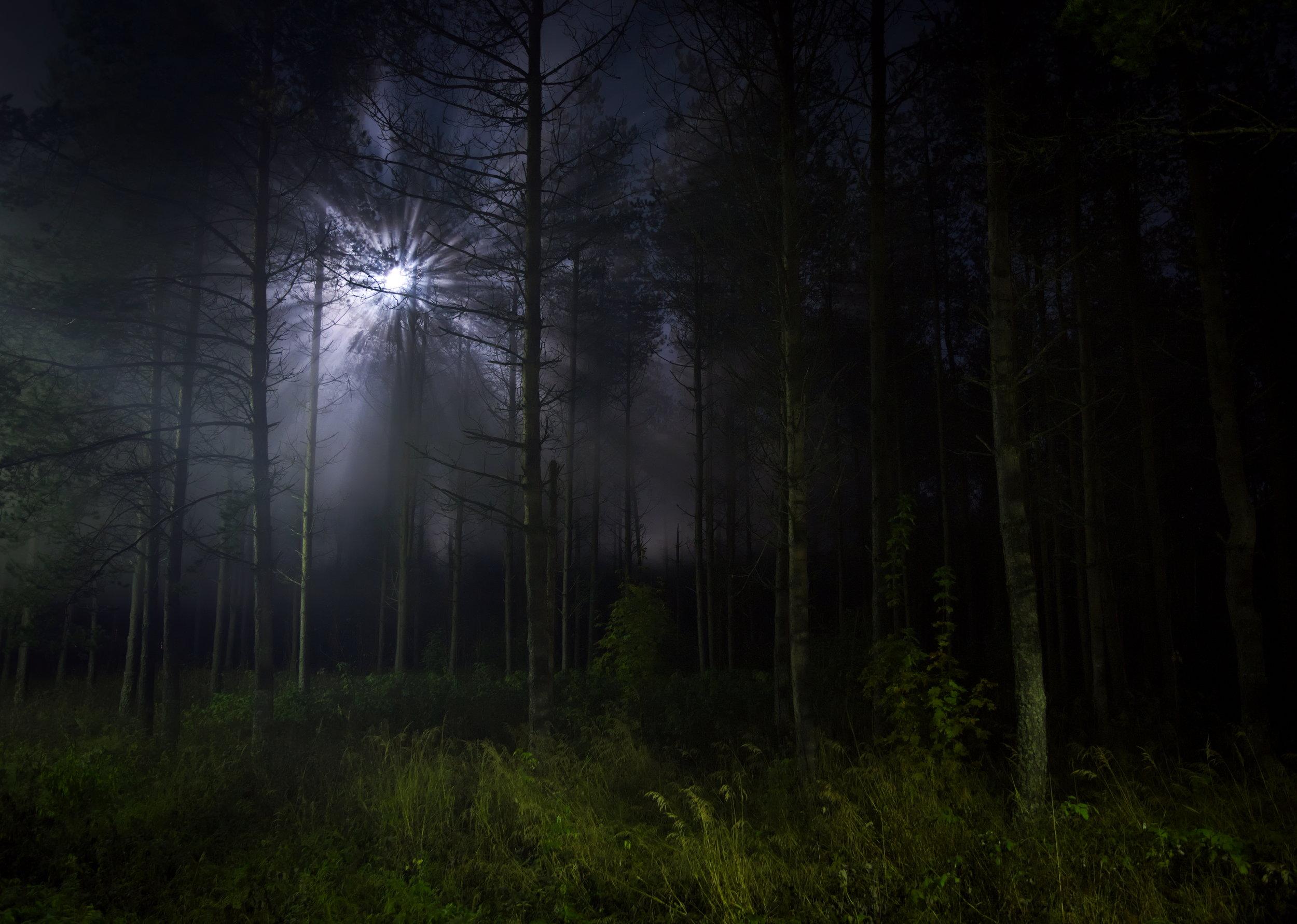 Moonlight in the Dark Forest