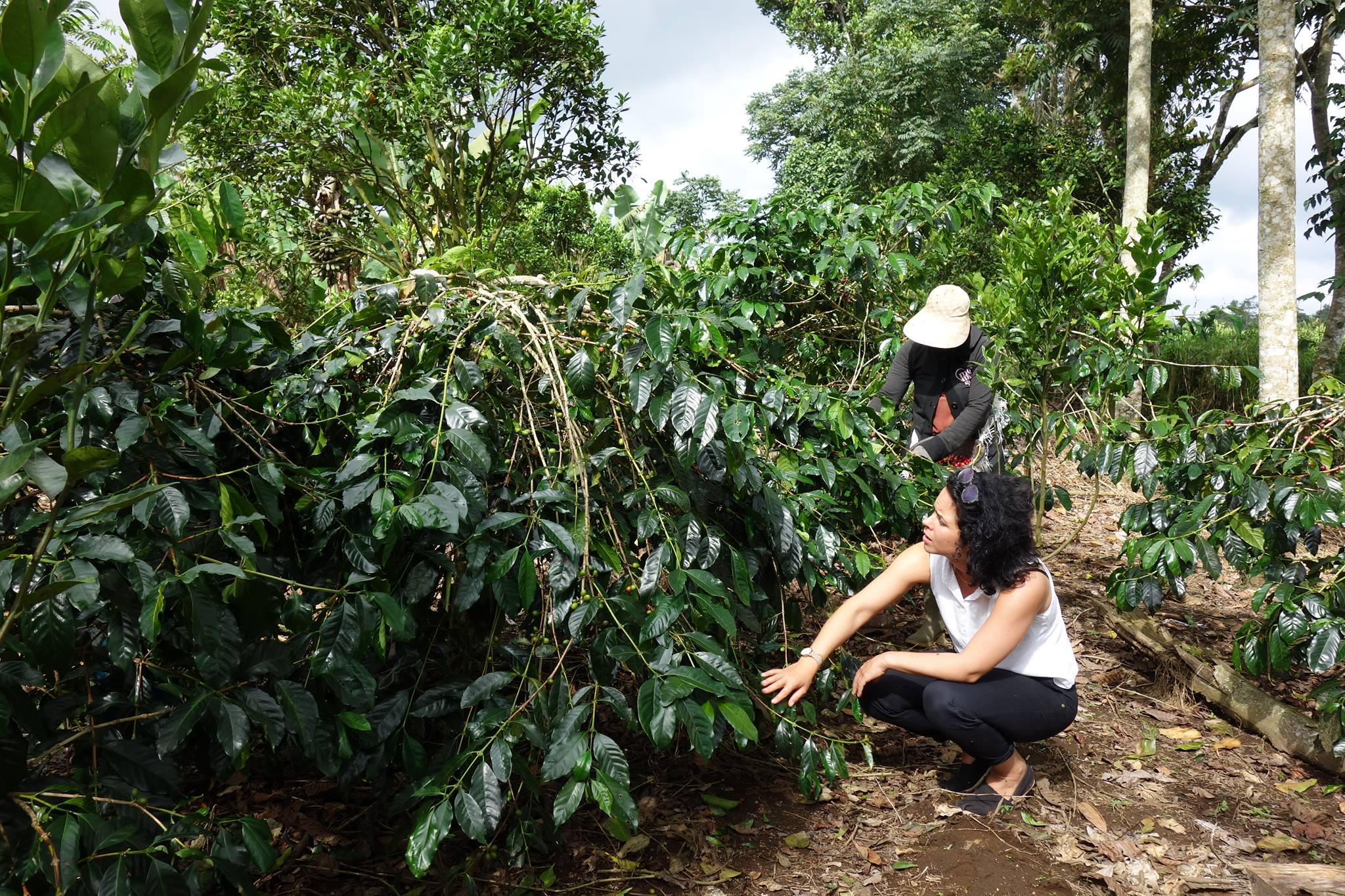 zitadusa coffee plantation.jpg
