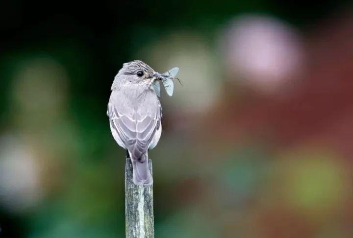 除了传授花粉之外,昆虫还为鸟类以及其他动物提供了食物来源,同时还能控制害虫数量。摄影:凯文 埃尔斯比(Kevin Elsby / Alamy)