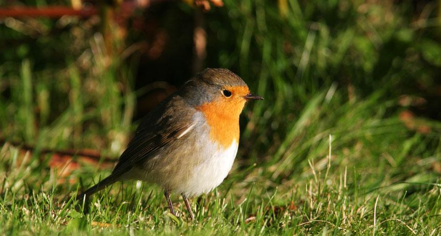 032718_DG_bird-compass_main.jpg