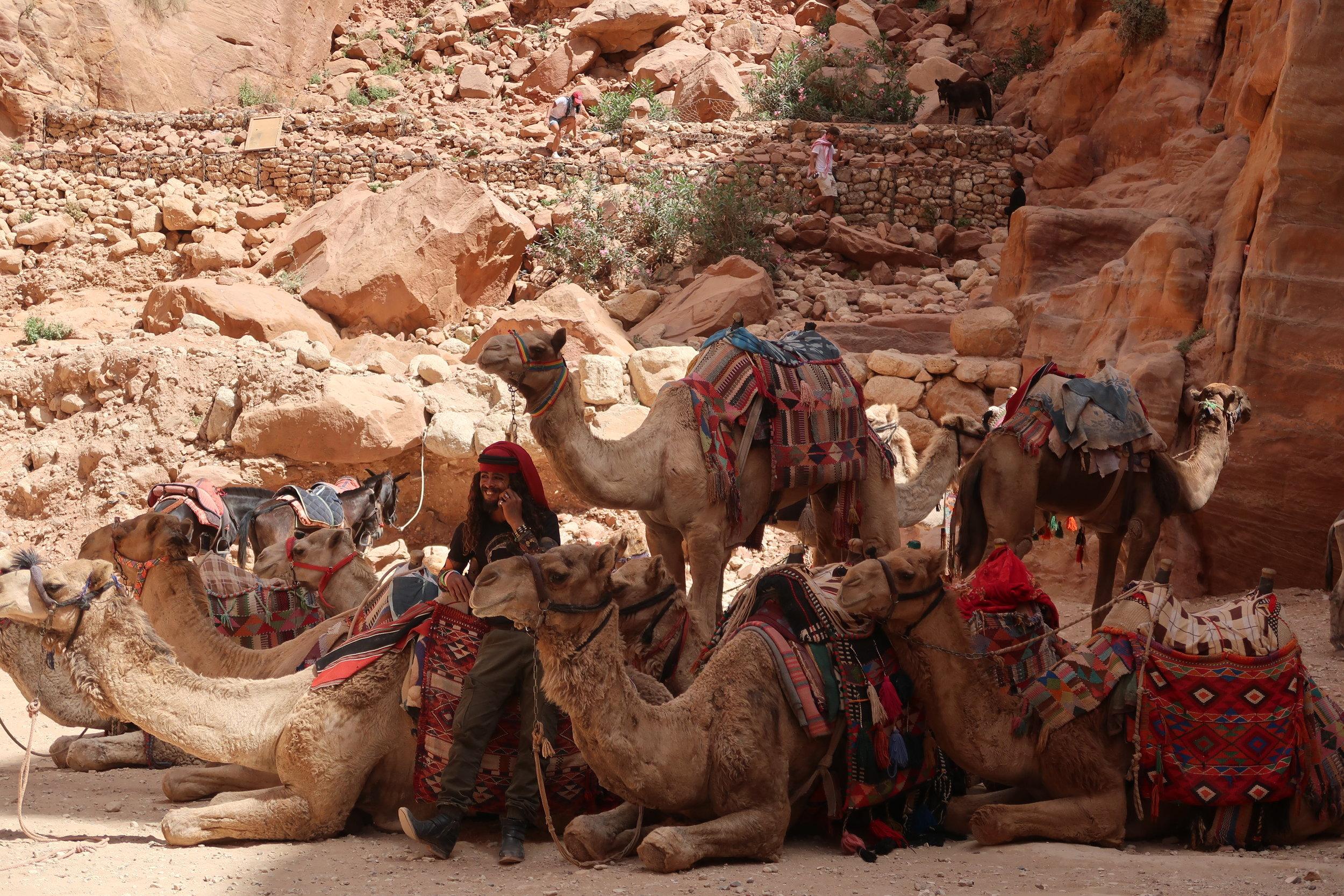 骆驼群里的贝都因人