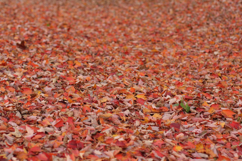 B16_Nov06_Fall_Photo_Walk_04.jpg