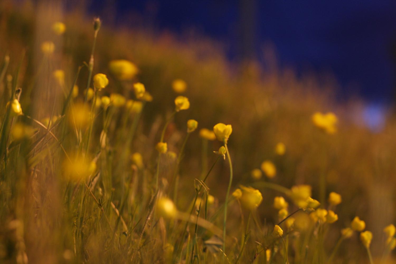 B16_May06_Walk_at_Night_03.jpg