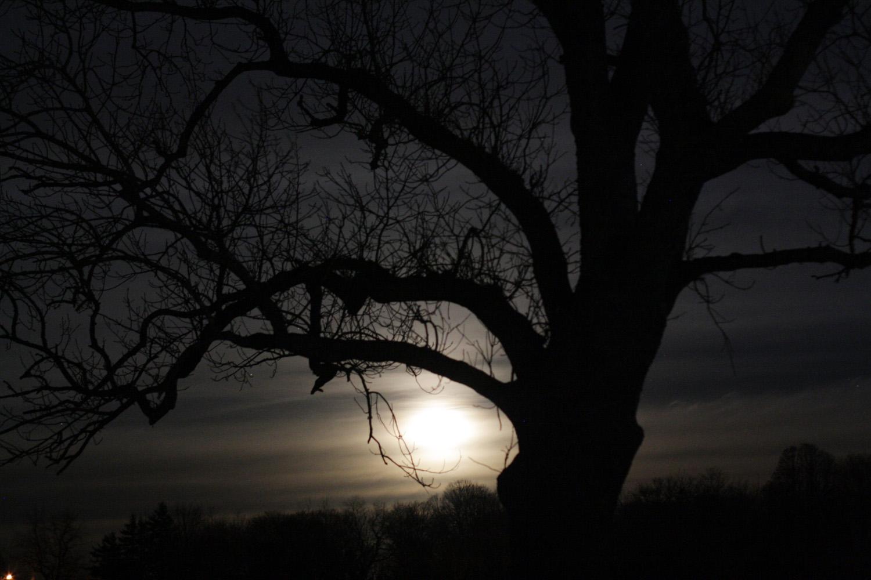 B15_Nov07_Moon_Tree_02.jpg