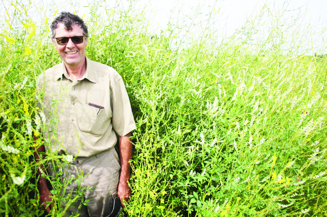 Roger Henry, a research technician with Agriculture and Agri-Food Canada, is pictured in late July among the Yellow blossom sweet clover planted in a bee pasture at the Harrington Research Centre north of Charlottetown. (Wayne Riley photo)
