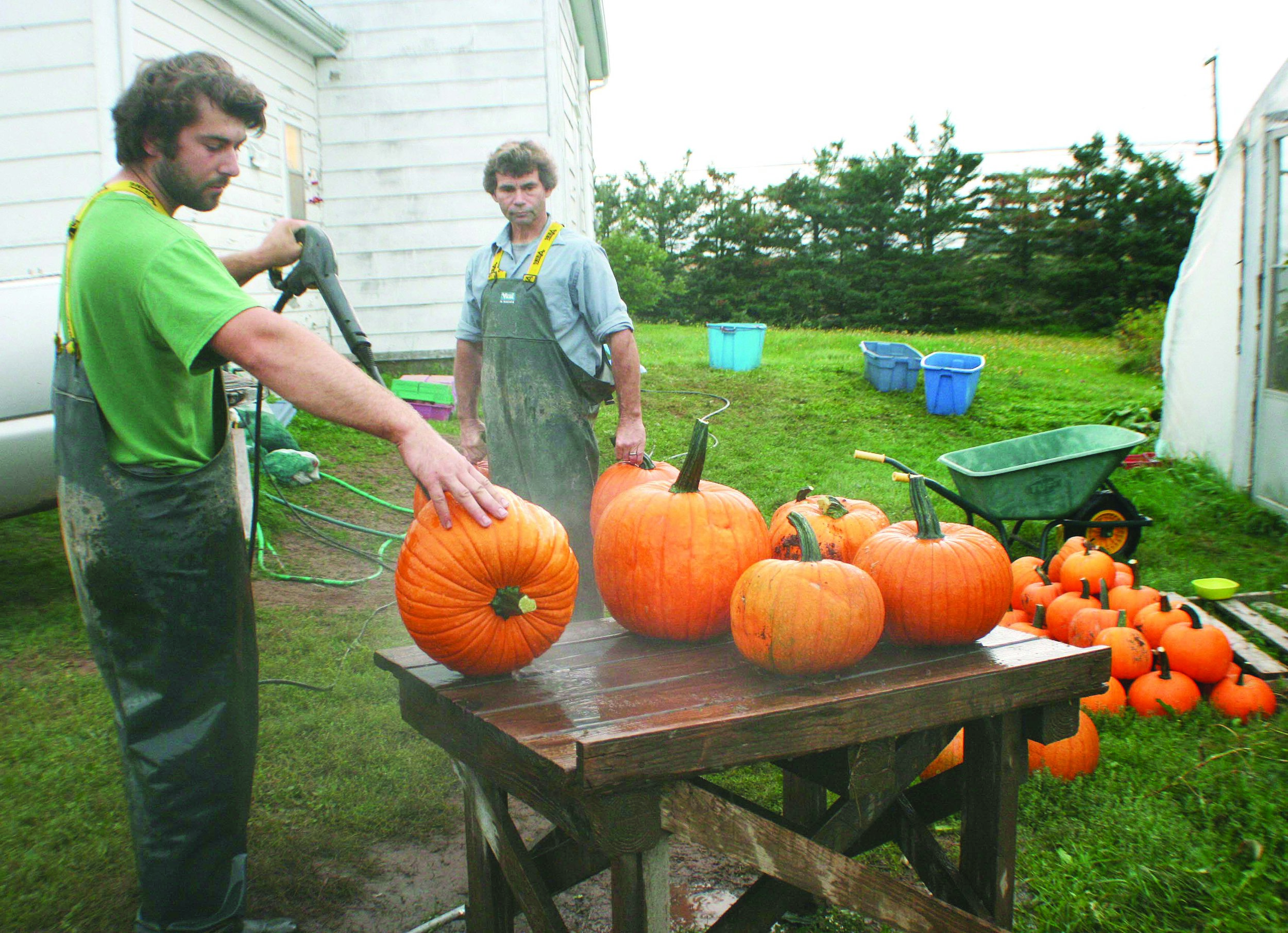 All of the produce at Murray's Farm Fresh Vegetables in Point de Bute, N.B., is washed before going into the family farm market. Nathan Murray spray-washes some of the more than 8,000 pumpkins grown on the farm this year, while his father Robert looks on.