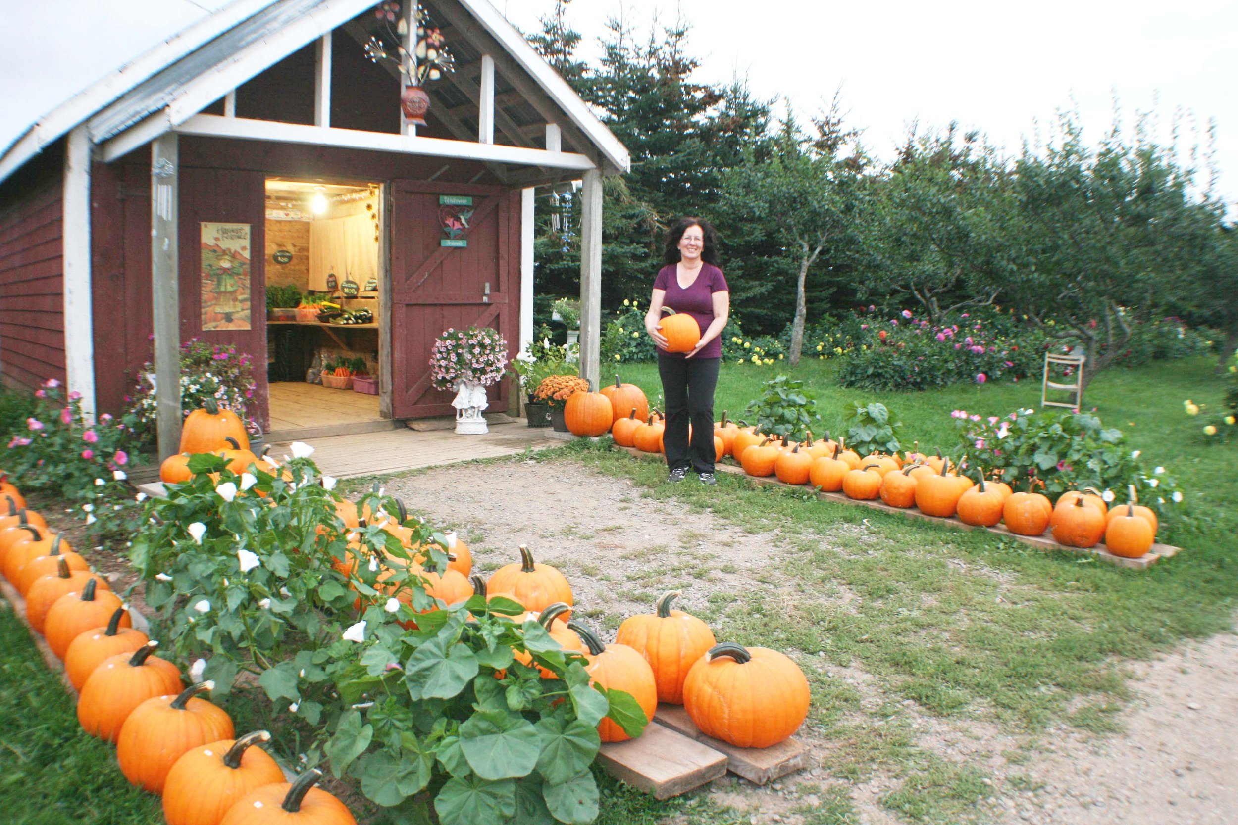 It was a bumper crop of pumpkins this year at Murray's Farm Fresh Vegetables. Shelley Murray holds one of the many pumpkins of different sizes for sale at her family's farm market. (Joan LeBlanc photos)