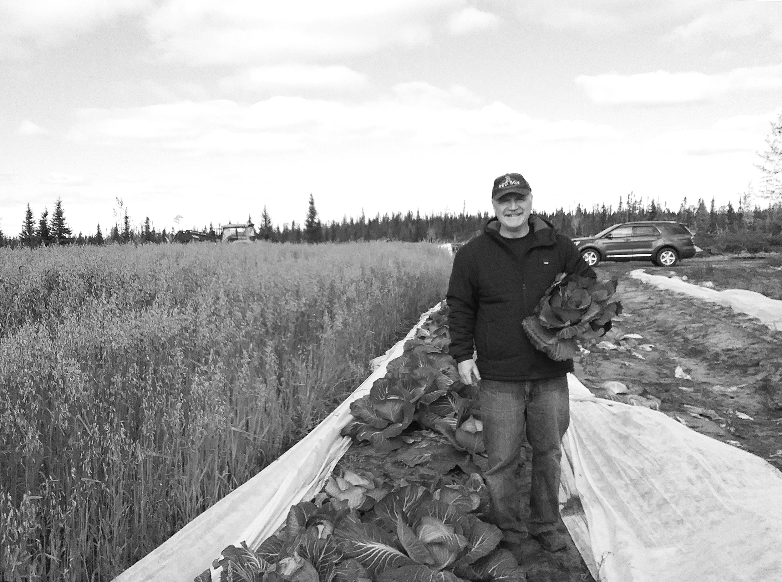 Des Sellars harvests Purple cabbage at his Nature's Best Farm in Happy Valley-Goose Bay, N.L. (Erin Anderson photo)