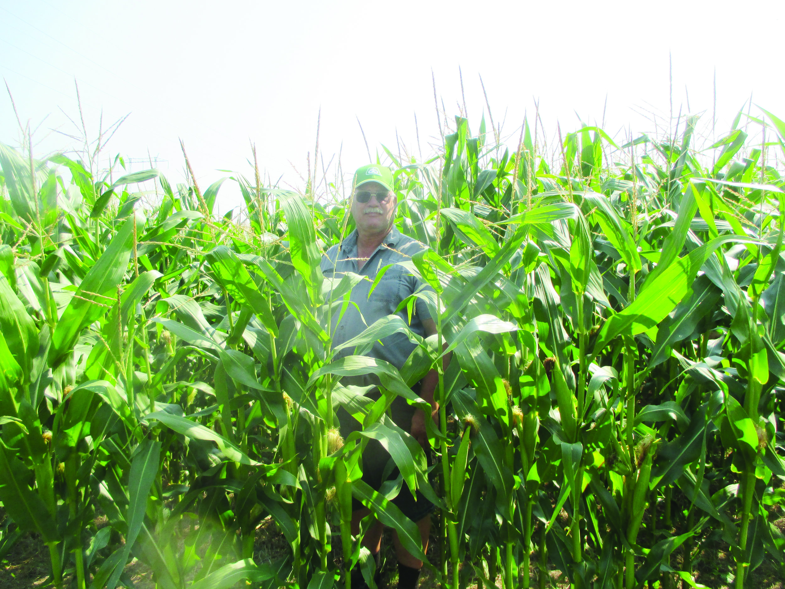 Kier Miller of Miller Farms in Sussex Corner, N.B., is pictured here in a cornfield. The New Brunswick Soil and Crop Improvement Association has named Miller Farms the province's 2017 farm of the year. (Submitted photos)
