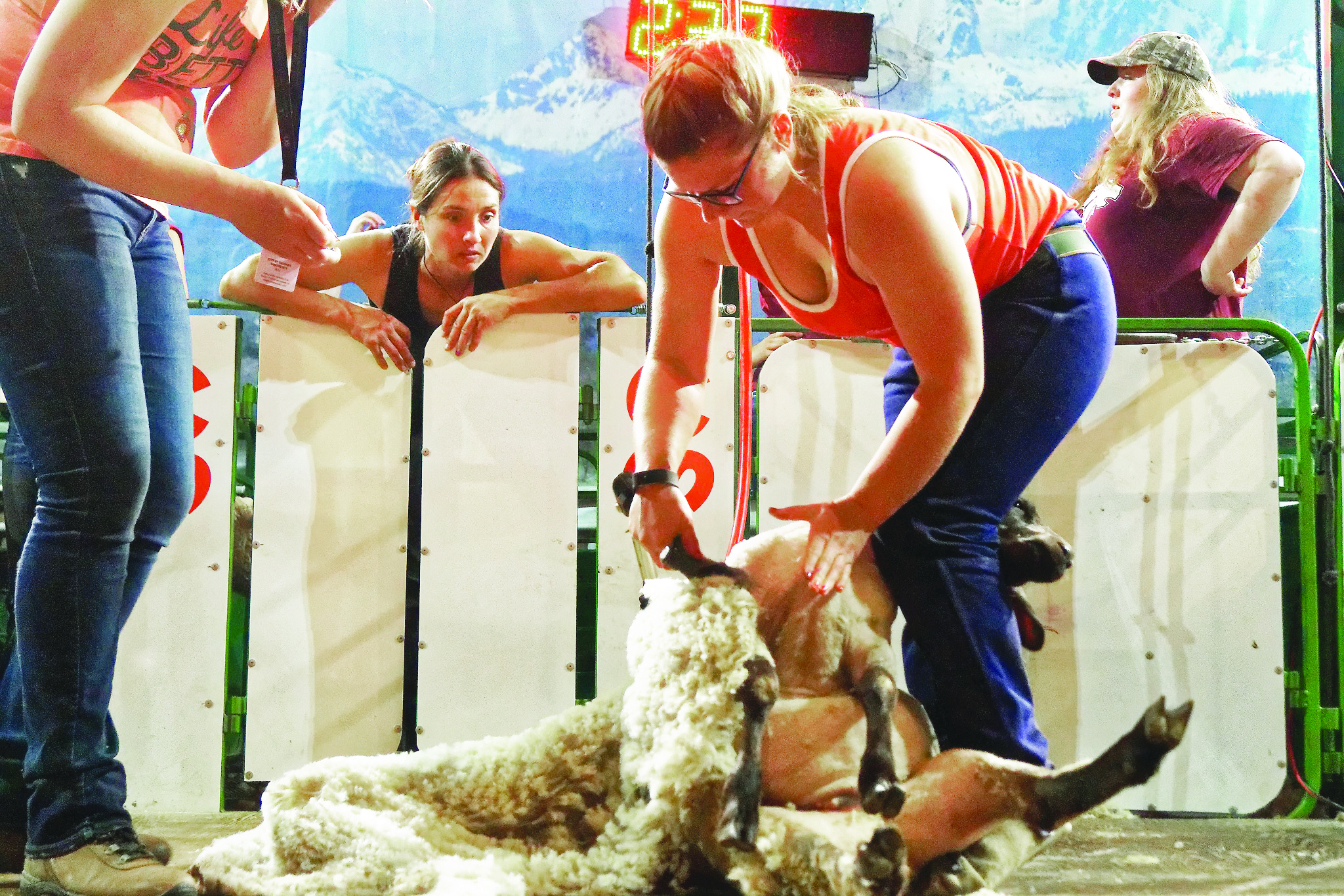 Amber Petersen competing at the Calgary Stampede this summer. Her friend and fellow shearer Pauline Bolay is pictured watching from the catch pen. (Submitted photo)