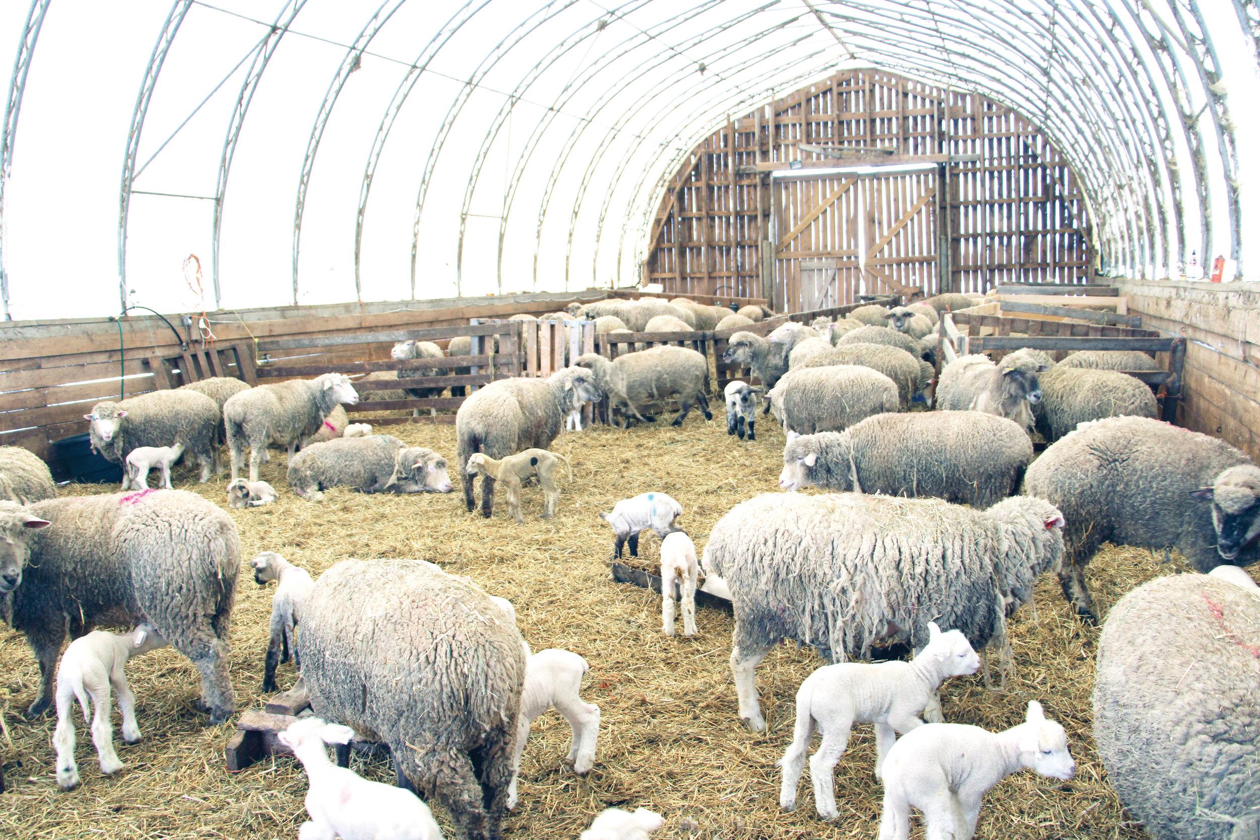 FF May 19 Wiggans Farm Pic 1.JPG