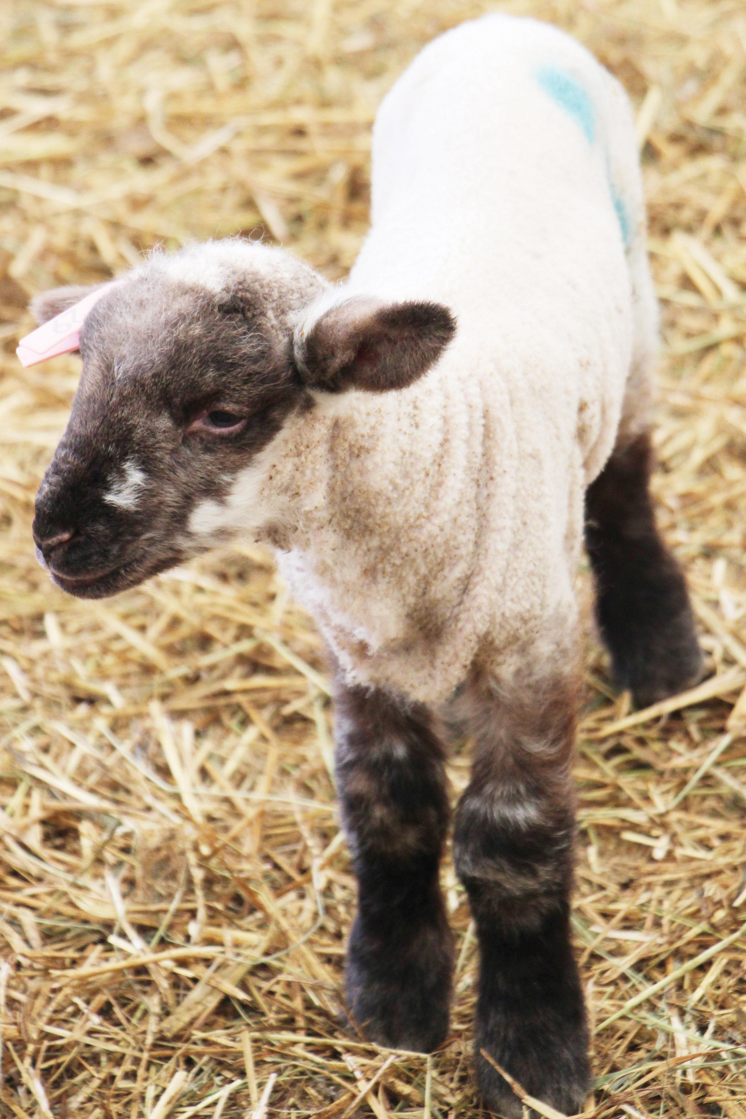 FF May 19 Wiggans Farm Pic 6.JPG