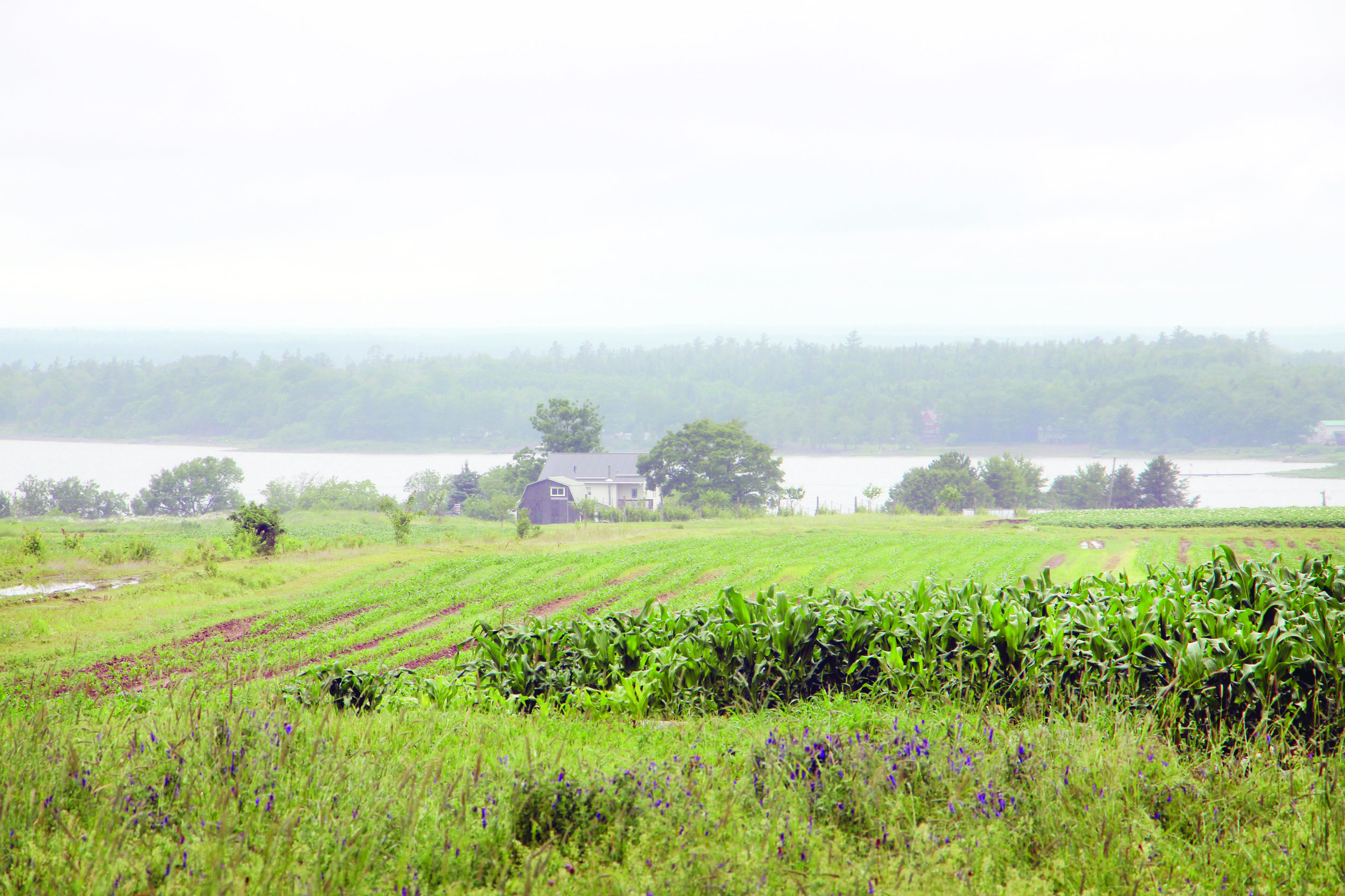 A view of some of the Slocum family's crops in Waterborough, N.B., looking toward Grand Lake. (George Fullerton photos)