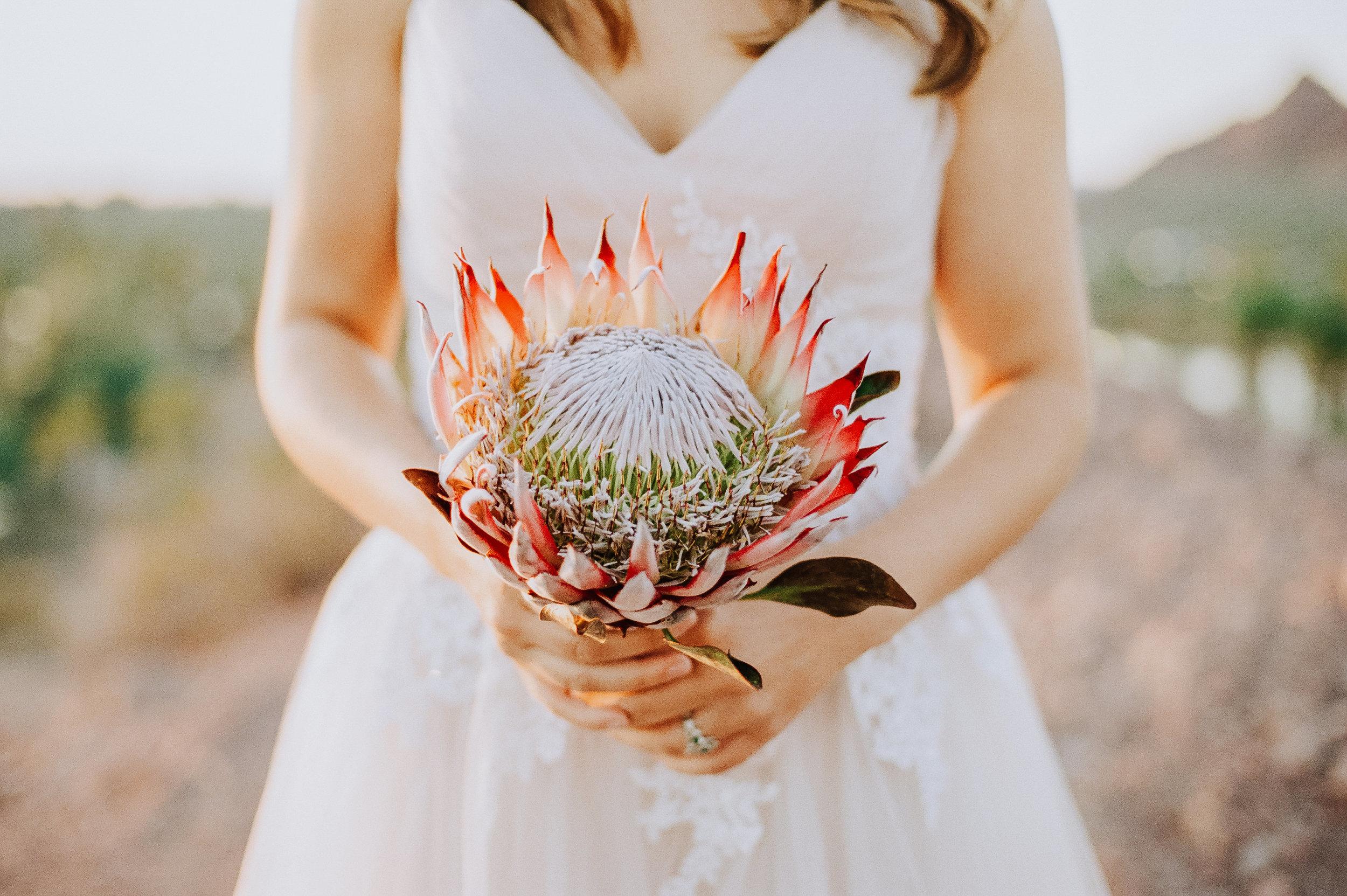 Phoenix-Arizona-The-Botanical-Studio.jpg