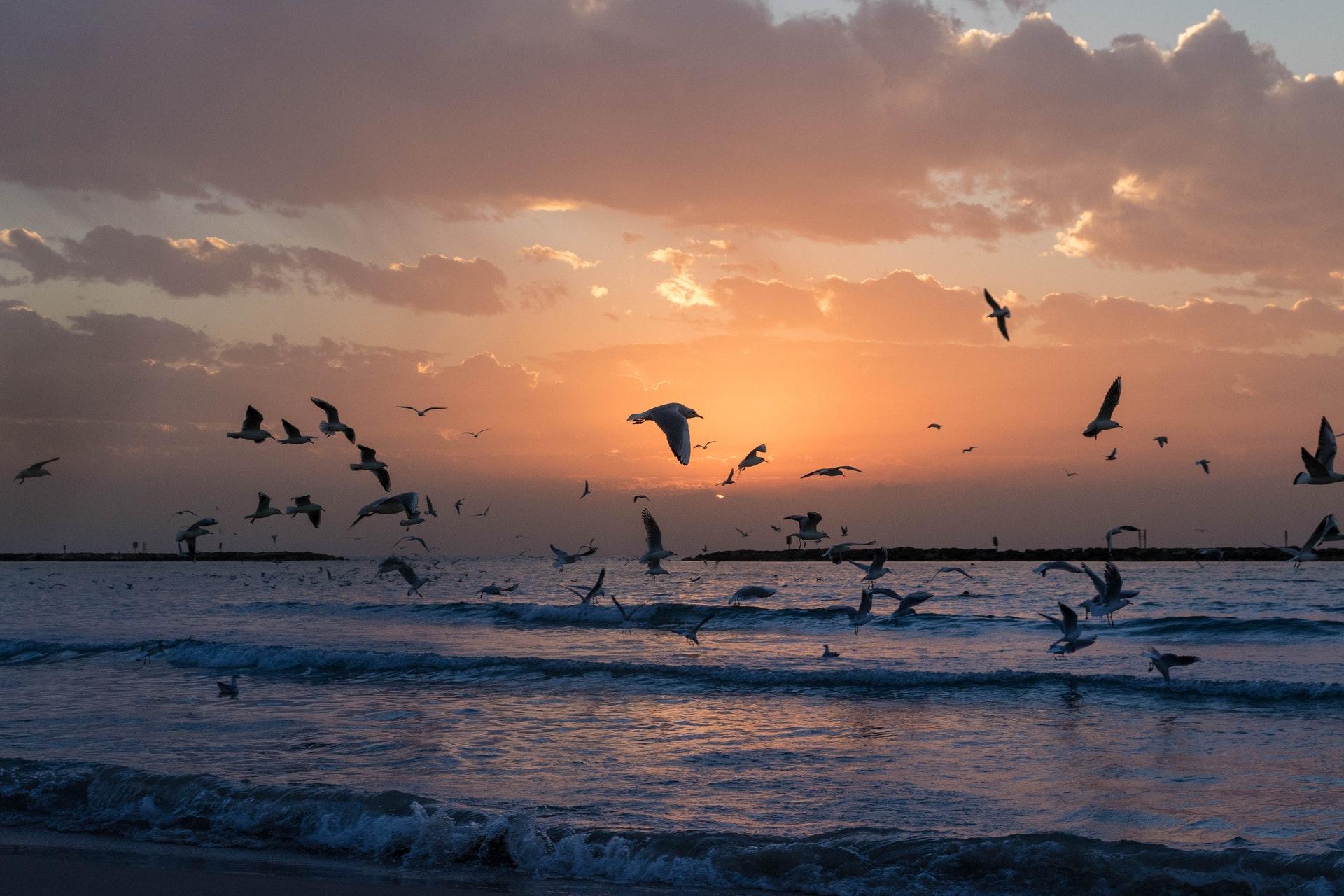 beach-birds-clouds-784849.jpg
