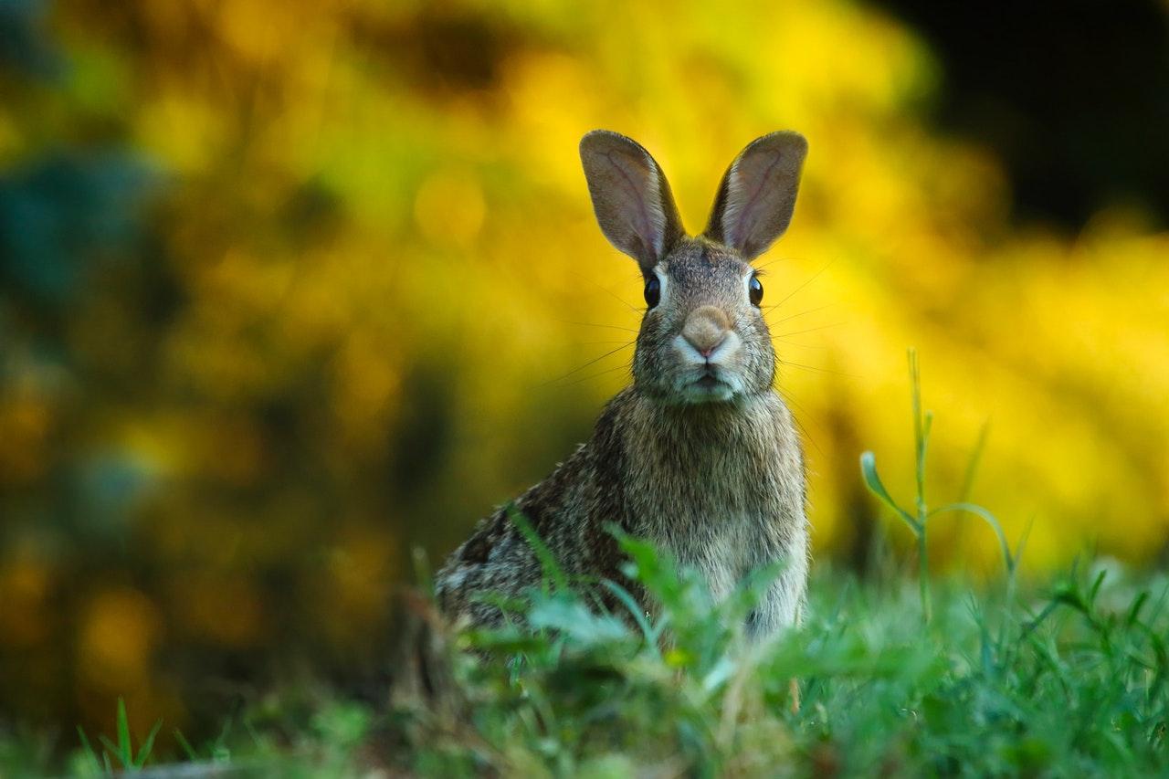 animal-blur-cute-247373.jpg