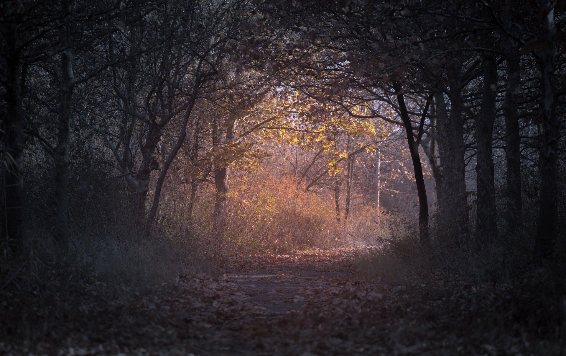 backlit-branch-dark-226721.jpg