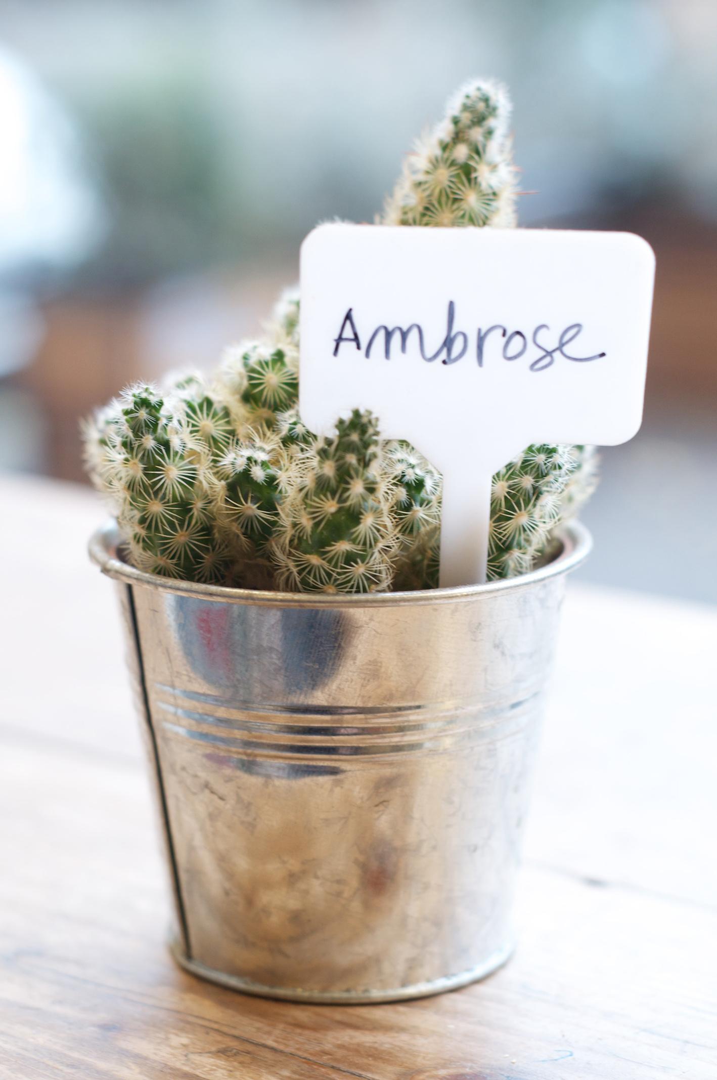 Ambrose.jpg