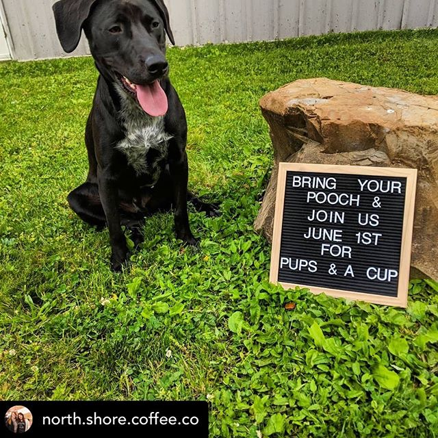 Posted @withrepost • @north.shore.coffee.co Sat  June 1st  10-12pm #pupinacup #northshorecoffeecompany  #coffee #puppaccino  #livemusic
